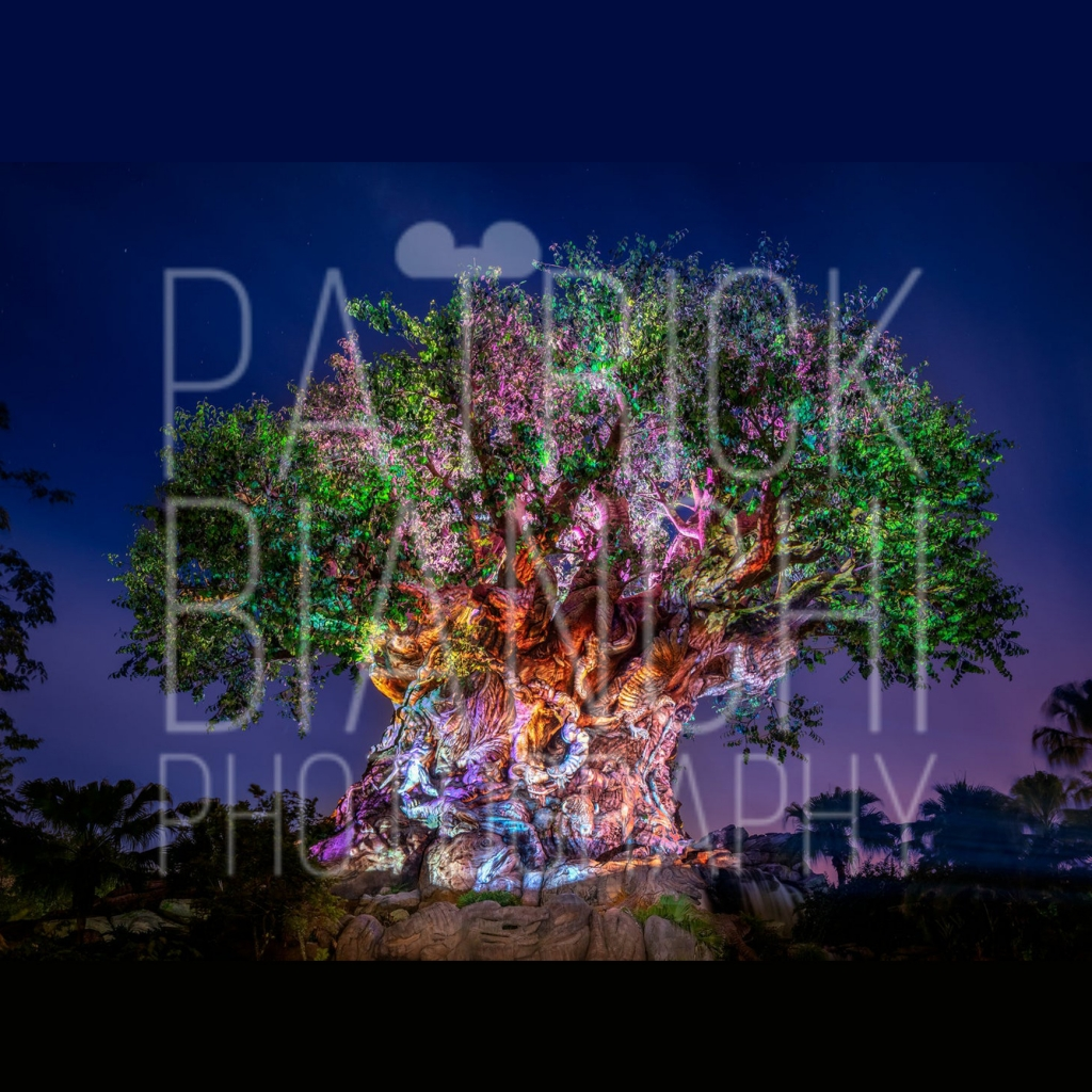 Patrick Bianchi Photography